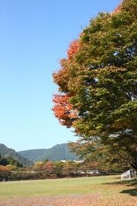 サクラの紅葉.JPG