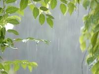 1DSC6242雨.jpg