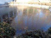凍る池1.JPG