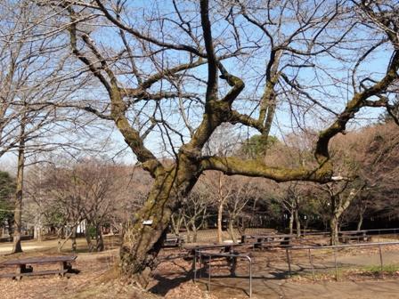 http://fureai-aikawa.com/blog/uploaded/DSC05635.JPG