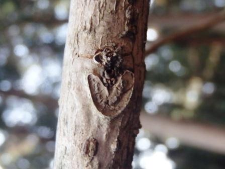 http://fureai-aikawa.com/blog/uploaded/P2100010.JPG