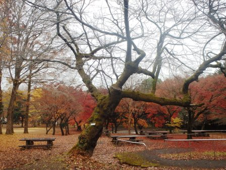 http://fureai-aikawa.com/blog/uploaded/PC010007.JPG