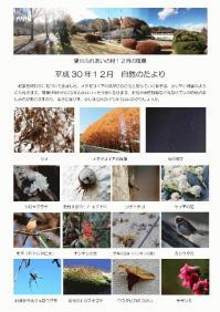 201812自然のたより.jpg